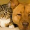 Gato y perro alérgenos