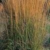 Pluma caña hierba