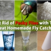 Cómo deshacerse de molestos moscas con este Neat Homemade Fly Catcher
