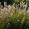 Hierbas perennes y follaje