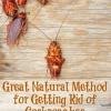 Gran Método Natural para deshacerse de las cucarachas