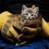 ¿Cómo las organizaciones de rescate de animales trabajan