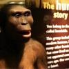 ¿Cómo son diferentes de nuestros antepasados humanos?