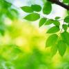 ¿Cómo funciona la fotosíntesis artificial