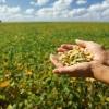 ¿Cómo puede la soja reducir el uso de energía en mi casa?