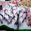 ¿Cómo se puede comprar pescado que son seguros para comer?