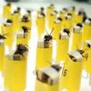 ¿Cómo se puede formar a las abejas para olfatear para bombas?