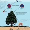 Cómo funciona el carbono-14 de citas