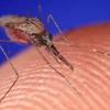 Resumen Virus del Nilo Occidental