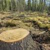 Cómo funciona la deforestación