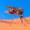 ¿Cómo funcionan los imanes de mosquitos