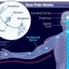 Cómo funciona el dolor