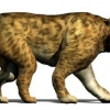 ¿Cómo los gatos dientes de sable trabajaron
