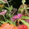 ¿Cómo atraer mariposas a un patio trasero