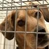 Cómo reducir los gastos de mascotas del hogar