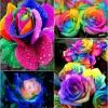 Cómo DIY colorido del arco iris Rosas Paso a paso las instrucciones de vídeo
