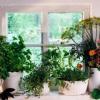 ¿Cómo hacer crecer su propio jardín de hierbas de interior