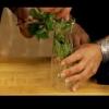 Cómo cosechar albahaca