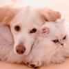 Cómo quitar las manchas de mascotas