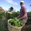 ¿Es mejor comprar comida local u orgánica?