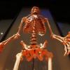 ¿Hay evidencia fósil de la evolución humana?