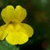 Flor del mono