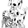 Actividades para mascotas