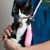 Guía de seguro de mascotas