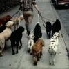 Cuidadores de mascotas 101