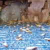 La prevención de las termitas