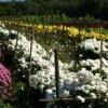 Replanteo de las verduras