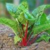 A partir de las nuevas plantas de hortalizas de piezas