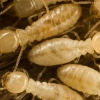 Daños fundación de termitas