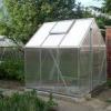 El trasplante de semillas de hortalizas de interiores