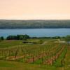 Guía definitiva para la nueva región vinícola york