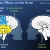 ¿Cuáles son los efectos del aislamiento en la mente?