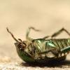 ¿Qué pasa si los insectos desaparecieron del planeta?
