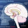 ¿Cuál es la neuroquímica de la felicidad?