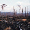 ¿Cuál es la mayor amenaza de la tierra para la biodiversidad?
