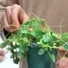 ¿A qué hora del día debería usted regar sus plantas?