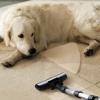 ¿Qué tipo de aspiradora funciona mejor para el pelo de mascotas?