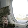 ¿Dónde es exactamente lo que almacenan los animales domésticos en un avión?