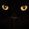 ¿Por qué la gente es tan supersticiosa acerca de los gatos?