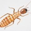 Madera y daños de termitas