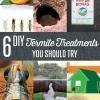 6 Tratamientos de termitas bricolaje
