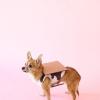 DIY S'mores vestuario perro