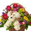 Cómo Organizar: 1-800-Flowers A-perro-Able
