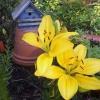 Cómo atraer pájaros a su jardín Usando Casas del pájaro
