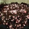 Cómo cocer al horno un pastel de chocolate de menta-Lácteos