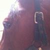 Cómo Canter un caballo